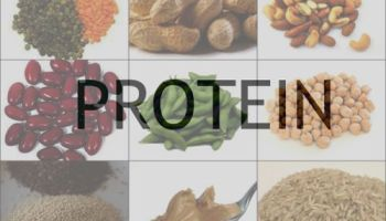 Protein Food Sources