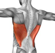 Should be exercising - Latissimus Dorsi (Lats)