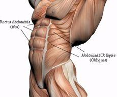 Core - Abdominal Obliques. hanhchampion.blogspot.com