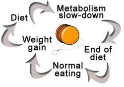 Yo-Yo Dieting Cycle Food Choices